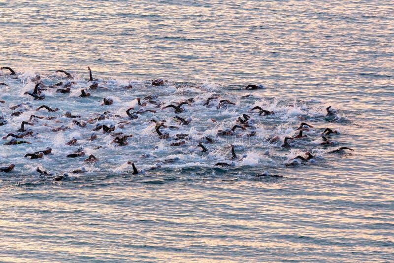 在Ironman三项全能竞争的开始的Triathletes游泳 图库摄影