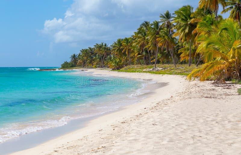 在Isla Saona海滩的棕榈树  免版税库存照片