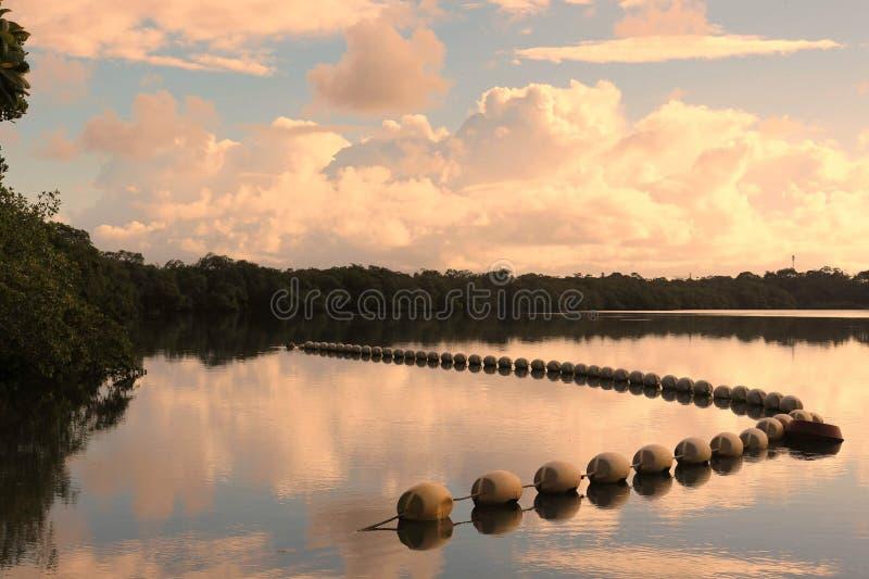在Jacuipe ` s河的水反射 图库摄影