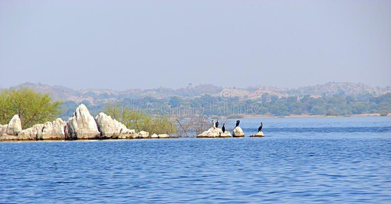 在Jaisamand湖Dhebar湖的鸟在乌代浦,拉贾斯坦,印度附近 库存图片