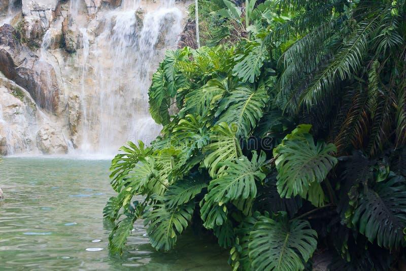 在Jardin Botanique de Deshaies,瓜德罗普海岛的瀑布 免版税库存图片