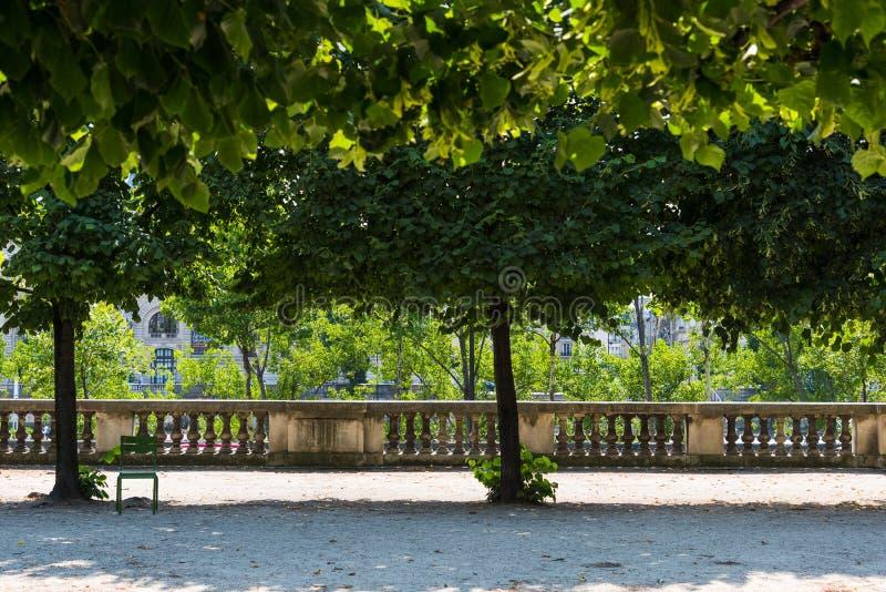 在jardin de Tuileries的绿色树在巴黎 库存照片