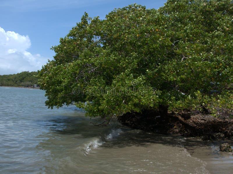 在Jauca海滩 库存照片