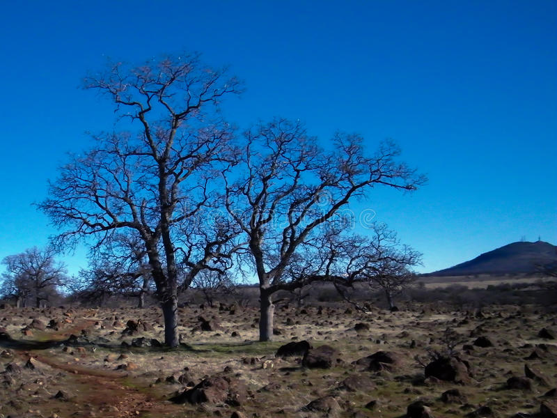 在Jed的偏僻的树俯视 免版税图库摄影