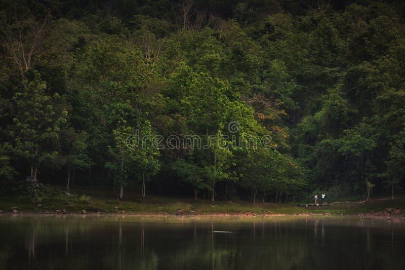 在Jedkod Saraburi的森林风景 免版税库存照片