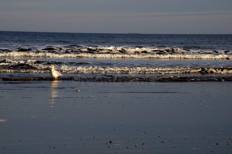 在Jenness海滩的海鸥在拉伊, NH 免版税库存图片