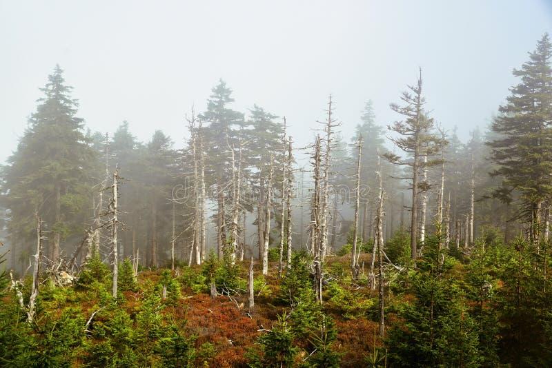 在Jeseniky山的有雾的大气 免版税库存图片
