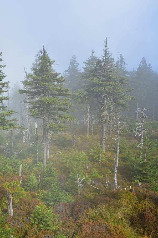 在Jeseniky山的有雾的大气 免版税库存照片