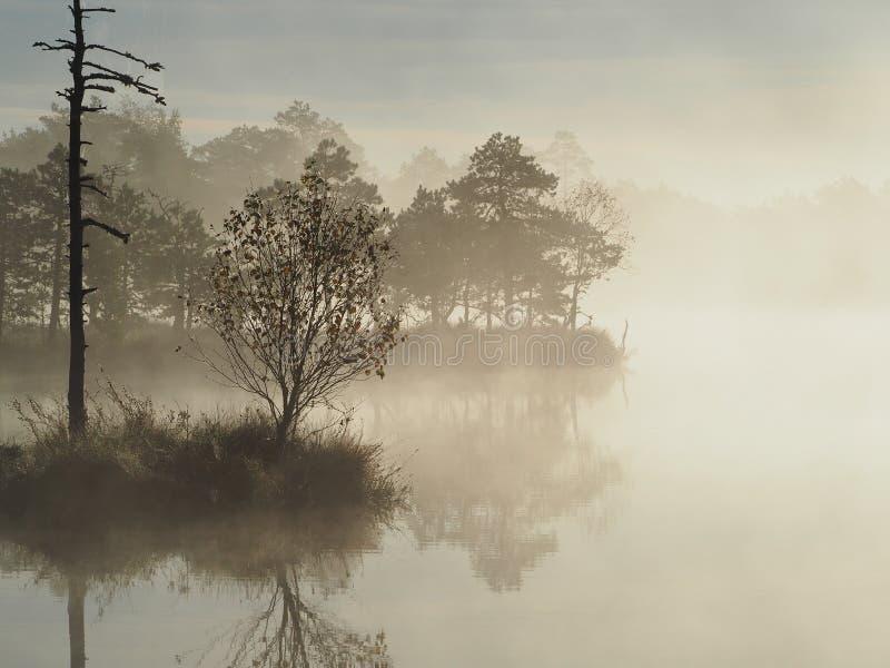 在Kakerdaja沼泽的美好的日出 免版税图库摄影