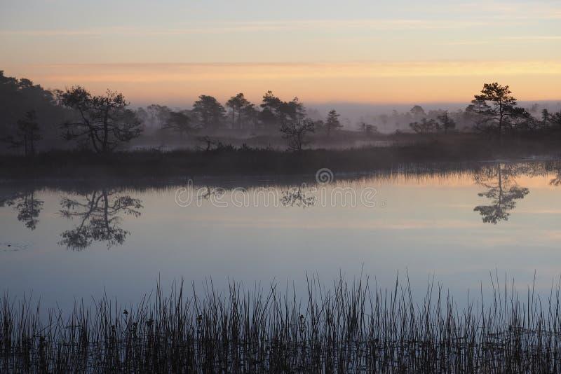 在Kakerdaja沼泽的美好的日出 库存照片