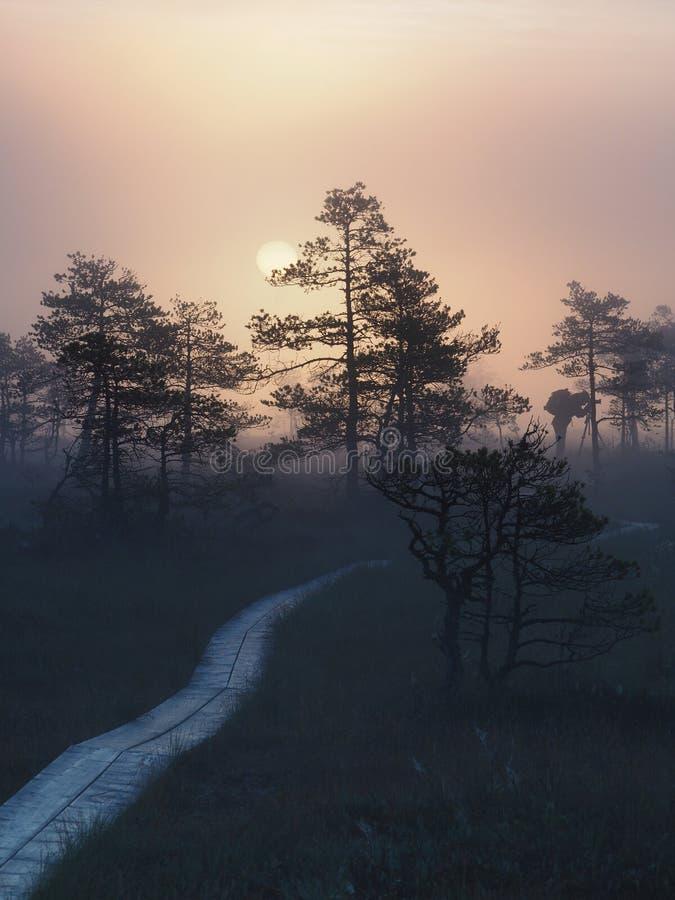在Kakerdaja沼泽的路 库存图片