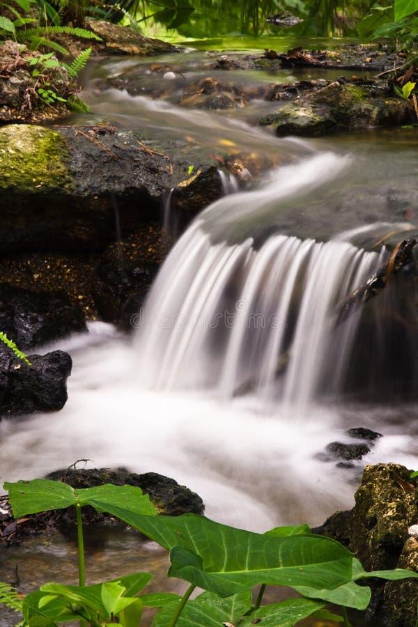 在Kanapaha的瀑布 免版税图库摄影
