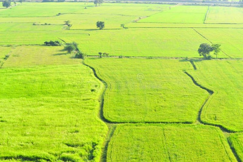 在Kanchanaburi的绿色米领域,泰国 库存图片