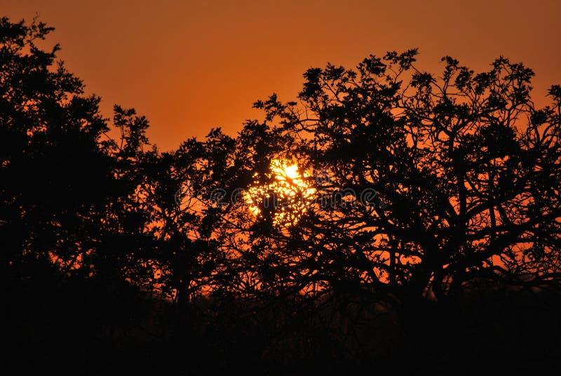 在Kapama私有比赛储备的日落南非大草原 免版税库存图片