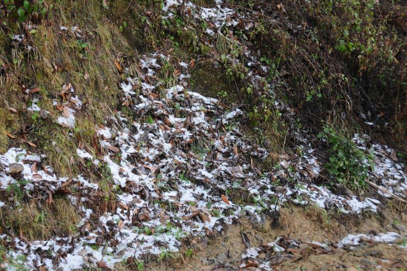 在Kausani,印度的雪秋天 免版税库存图片