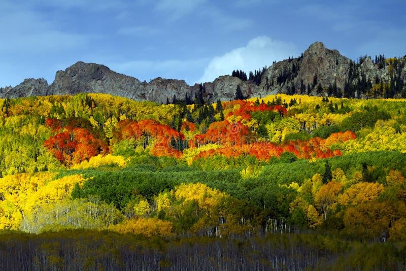 在Kebler通行证,科罗拉多的红色亚斯本 库存照片