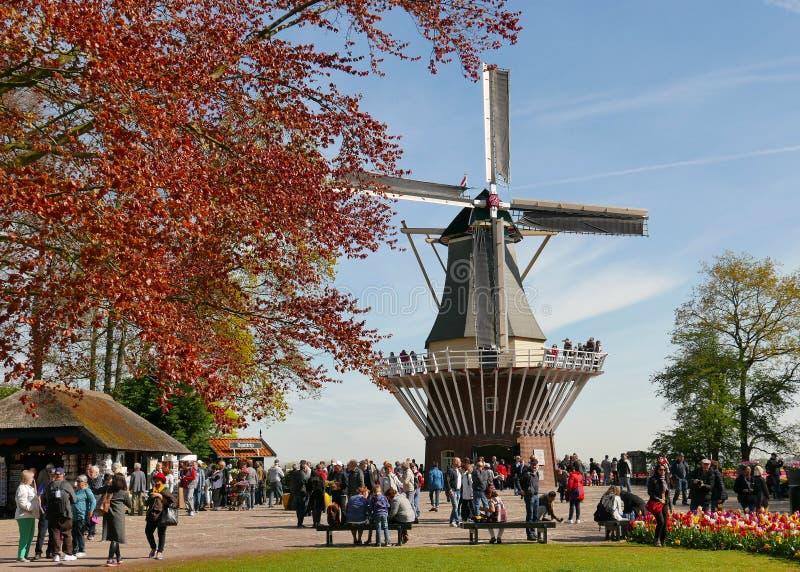 在keukenhof庭院的风车 免版税图库摄影