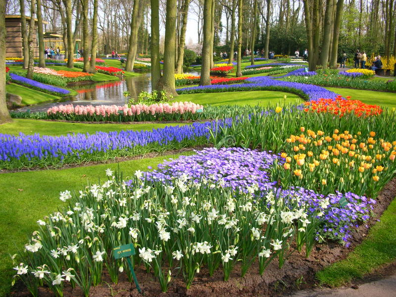 在Keukenhof,荷兰的花 库存图片