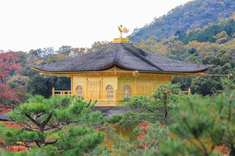在Kinkakuji寺庙(金黄亭子)的秋叶 库存图片
