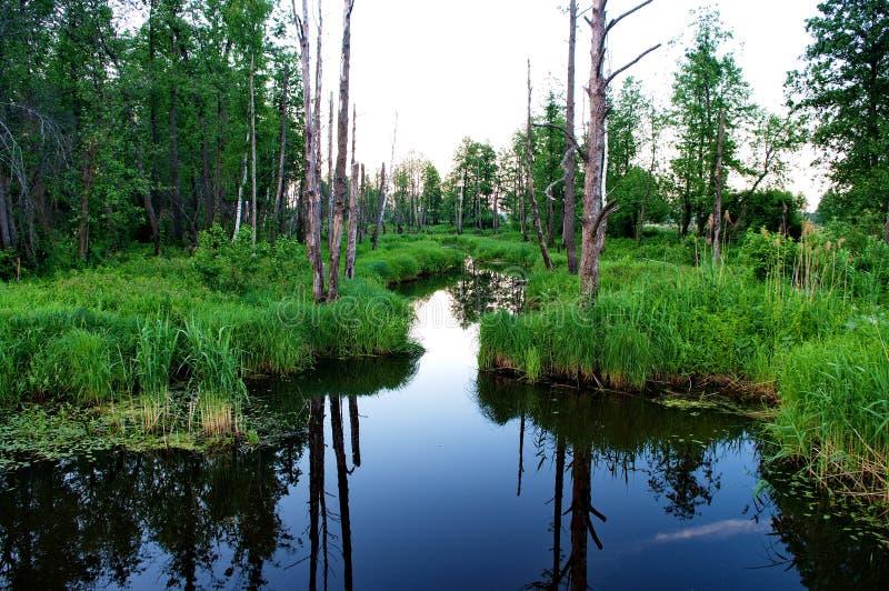 在Klyazma河的洪泛区 免版税图库摄影