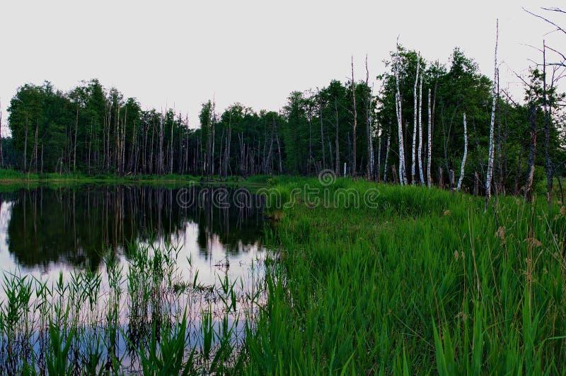 在Klyazma河的洪泛区 免版税库存图片