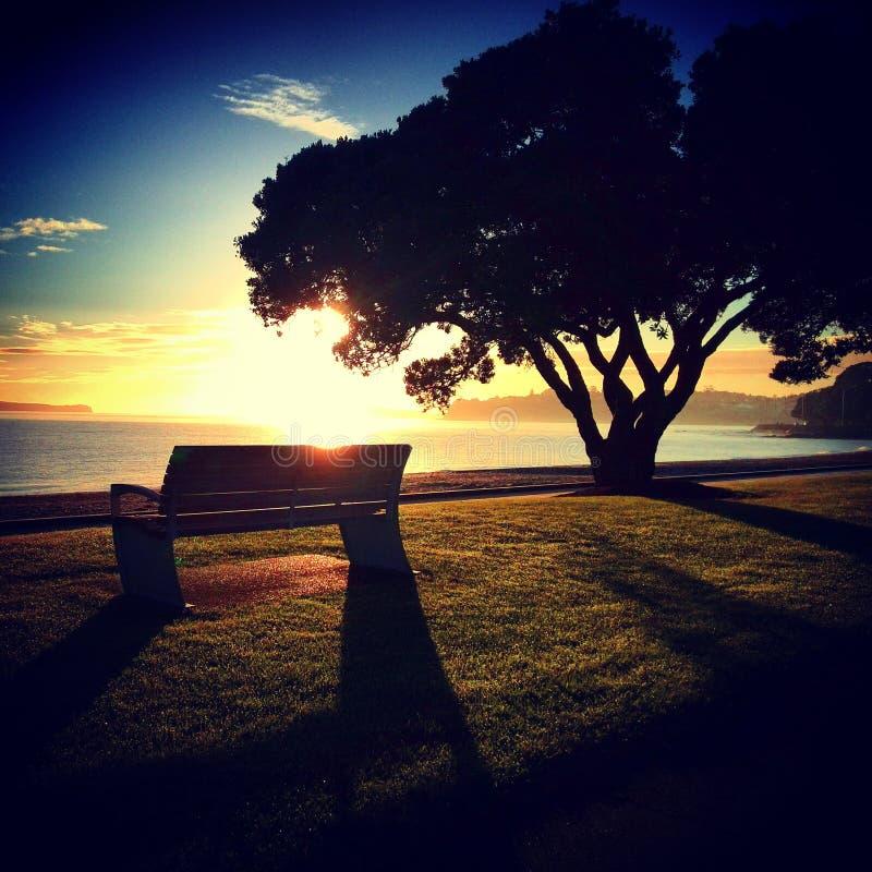 在Kohimarama海滩的早晨日出 库存图片