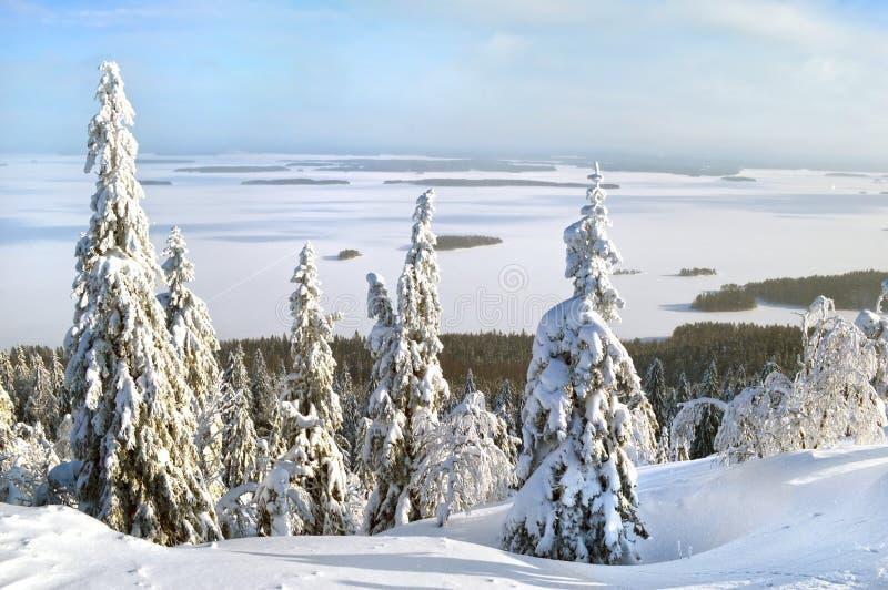 在Koli国家公园Kolin kansallispui的引人入胜的风景冬天风景图片 库存照片