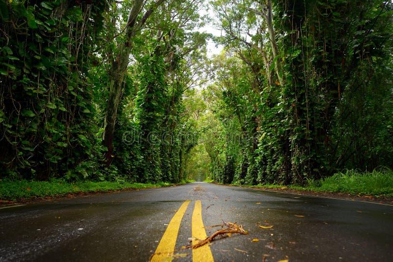 在Koloa镇附近的玉树隧道考艾岛的 免版税库存照片