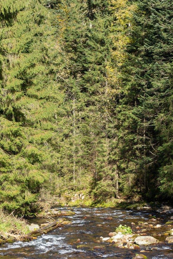 在Koscieliska谷的Koscieliski小河在扎科帕内附近的波兰Tatra山在波兰 库存图片