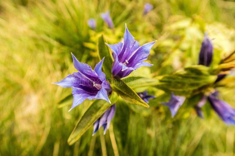 在Krkonose山的植物 免版税库存图片