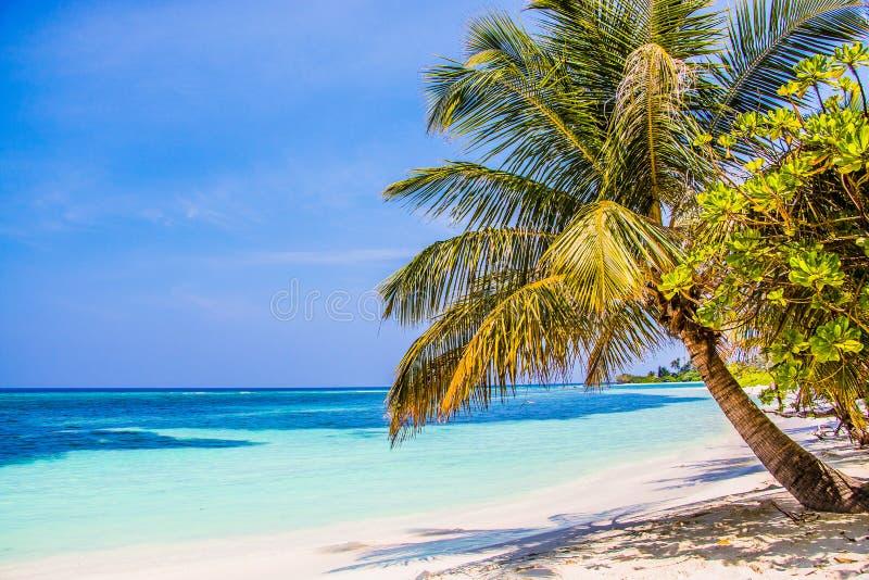 在Kuredu的海滩棕榈 库存照片