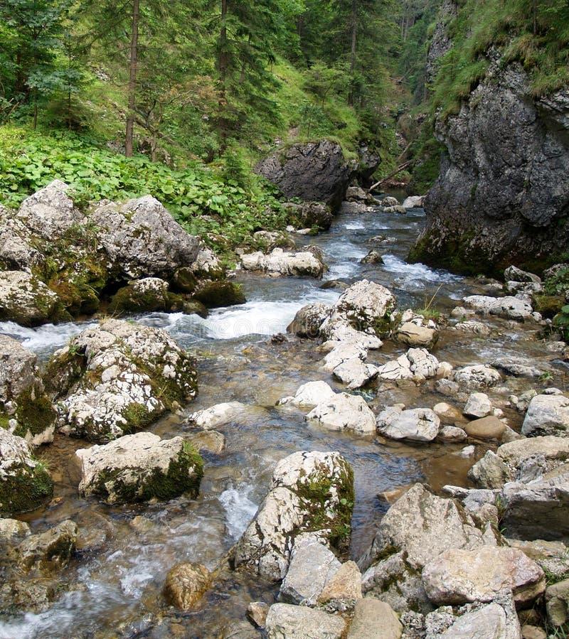 在Kvacianska谷,斯洛伐克的山流。 库存图片