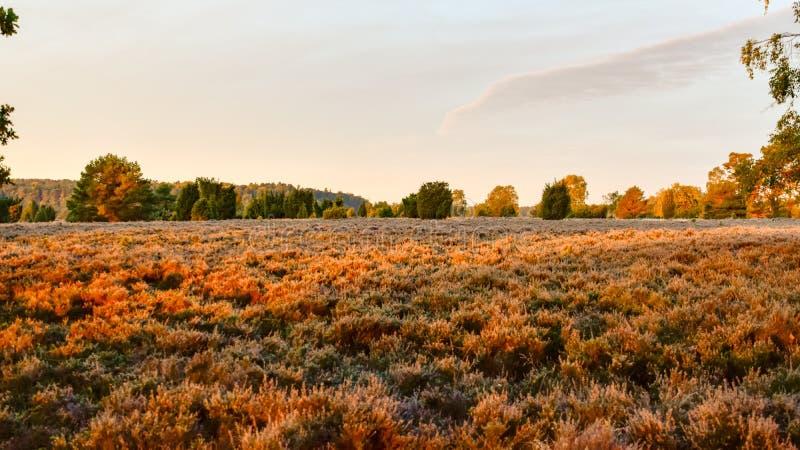 在LÃ ¼ neburg荒地的金黄秋天 库存照片