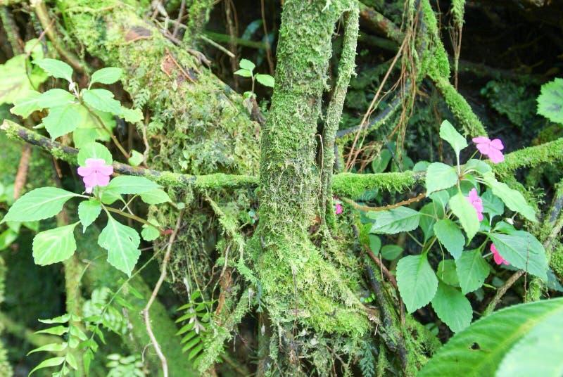 在La雷乌尼翁冰岛的热带植被 免版税库存图片