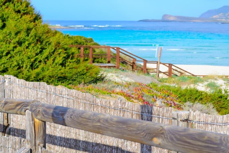 在La Pelosa海滩的里德篱芭在斯廷廷奥 图库摄影