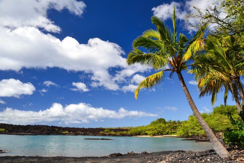 在La Perouse海湾- Makena,毛伊,夏威夷的棕榈树 库存图片