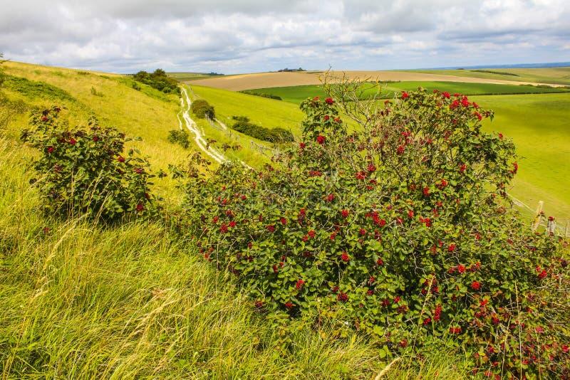 在Lancing的野生莓果下来,东部苏克塞斯,英国 图库摄影