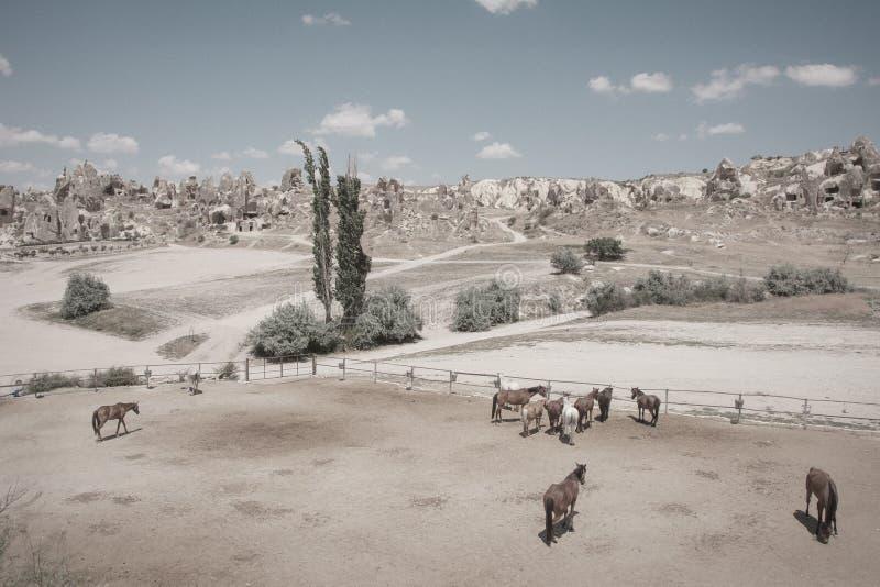 在landskape的马 夏天在卡帕多细亚 免版税库存照片