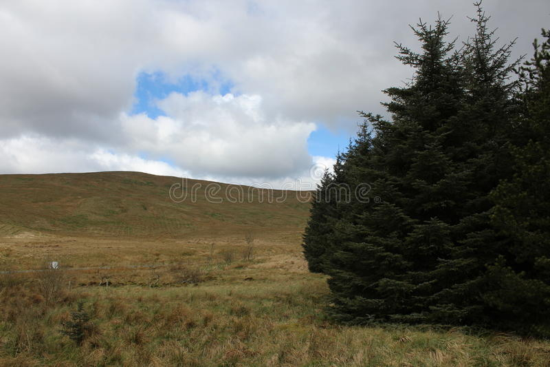 在lennoxtown附近的森林 免版税图库摄影