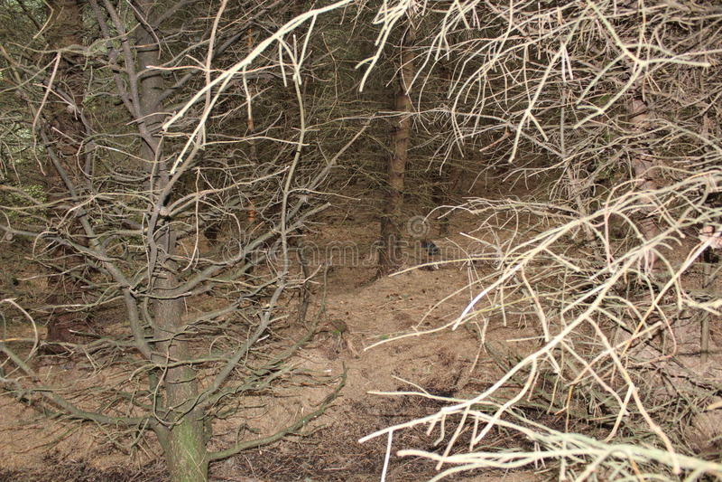 在lennoxtown附近的森林 库存照片