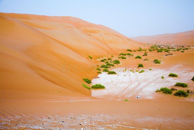 在Liwa绿洲,阿联酋的惊人的沙丘形成 免版税库存照片