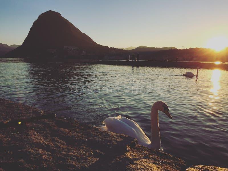 在Lugano湖,瑞士的日落 库存图片