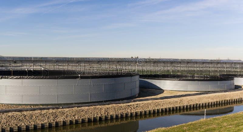在Maasdijk的三个接雨水的桶 库存照片