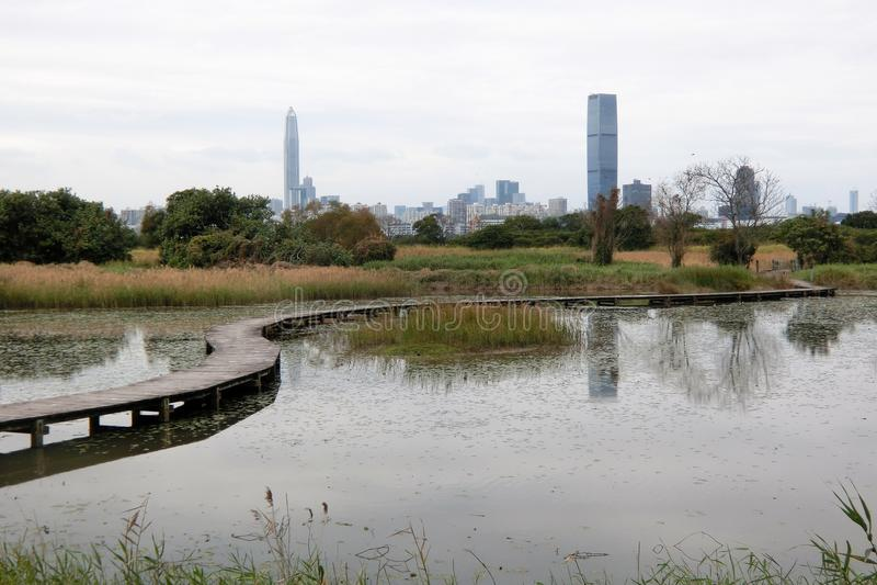 在Mai Po自然保护的木桥在香港 库存图片