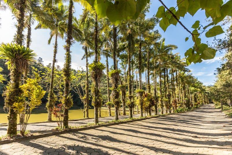 在Malwee公园的皇家棕榈 Jaragua做南水道,圣卡塔琳娜州 免版税库存照片