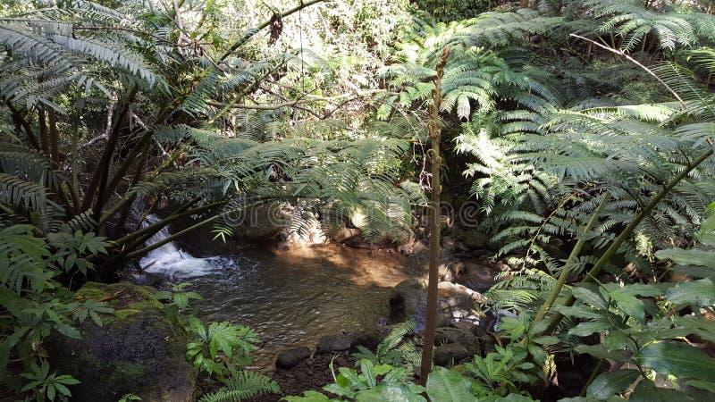 在manoa秋天夏威夷的水小河 免版税图库摄影