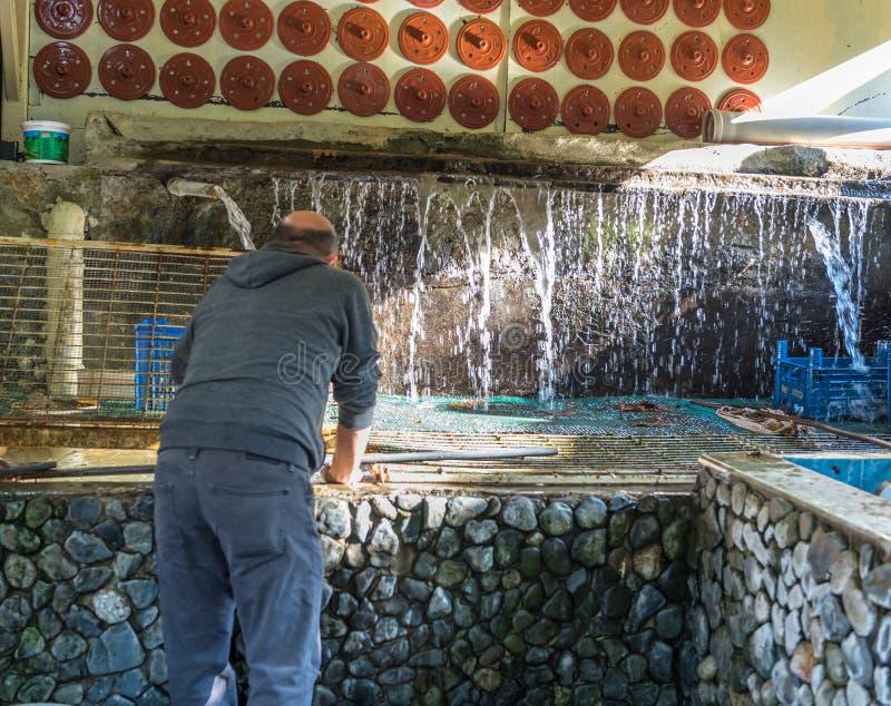 在Masukiye供以人员卖鳟鱼,本机和游人的一个普遍的目的地 免版税库存照片