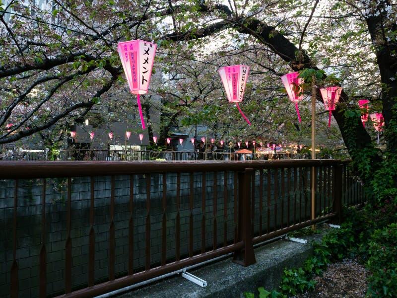 在Meguro河的樱花节日期间纸灯在晚上点燃了 免版税库存照片