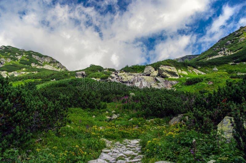 在Mengusovska谷的夏天风景 Tatra山 Slovaki 免版税图库摄影