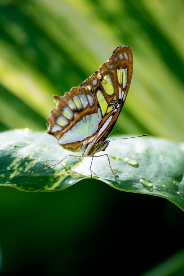 在Mexiko的蝴蝶 免版税图库摄影